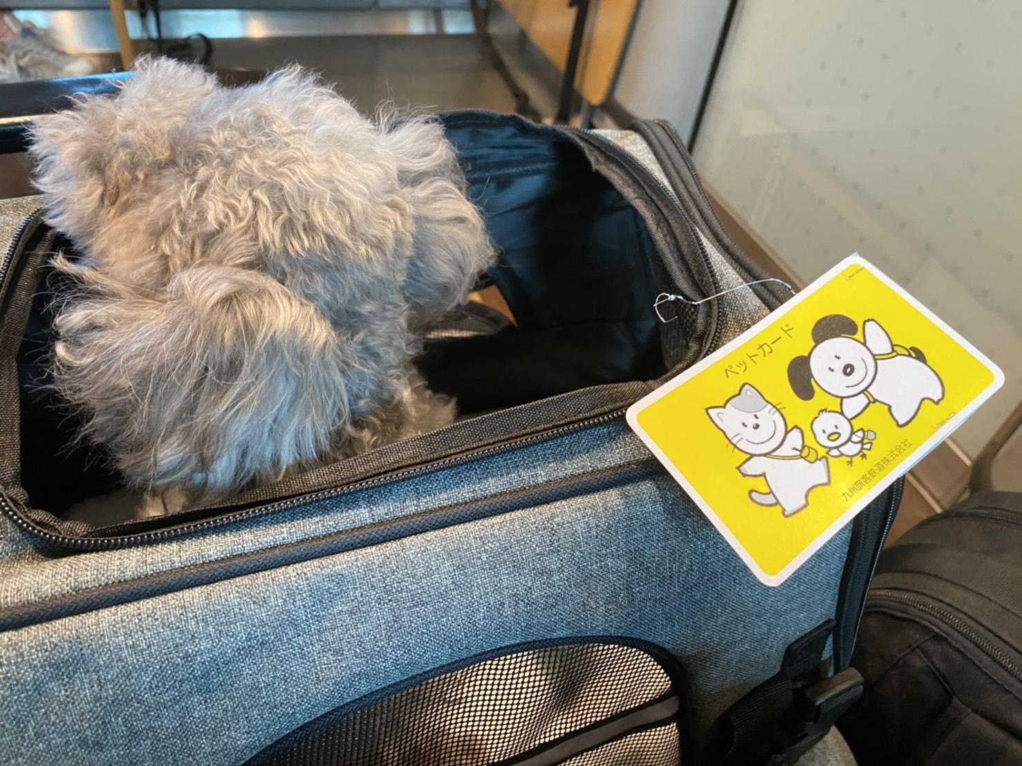 お犬さんと新幹線で千葉から長崎へ!【おすすめペットキャリーも紹介】